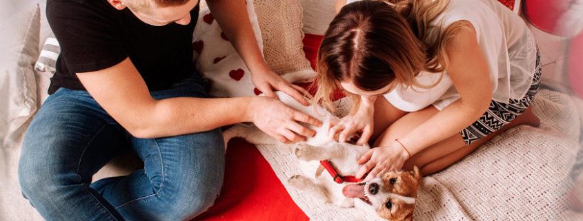 cattivi odori in casa animali profumi perambiente